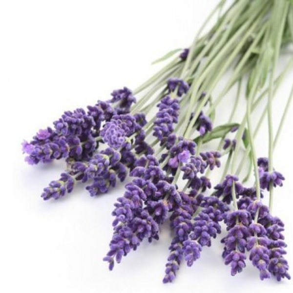 Essential Oils: A Healer in Every Home